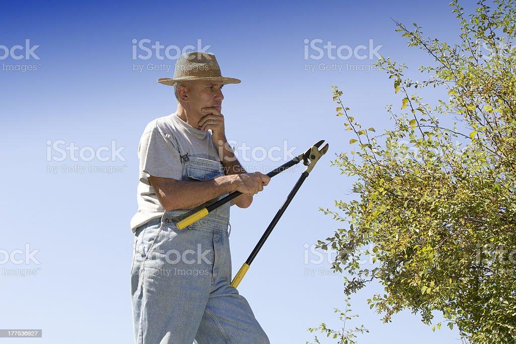 Gardener thinks how to cut hedge stock photo