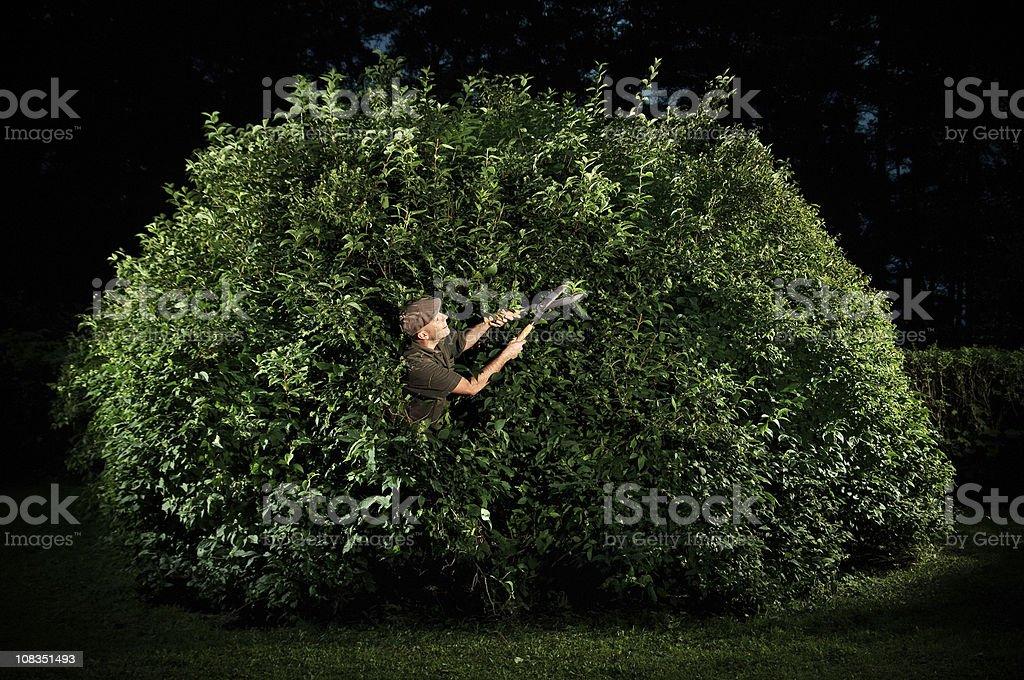Gardener Trimming Big Bush stock photo