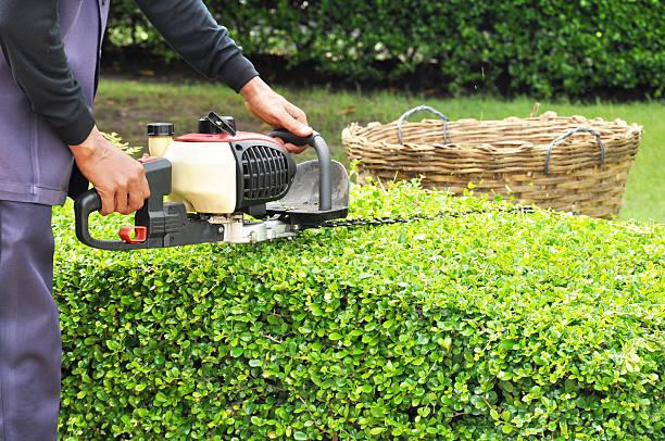 Gardener trimming green bush with trimmer machine stock photo
