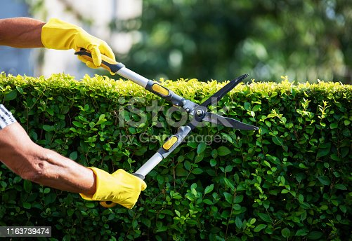 Close up of unrecognizable gardener hands Trimming Hedge In Garden