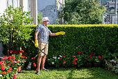 Full length male Gardener Trimming Hedge In Garden.