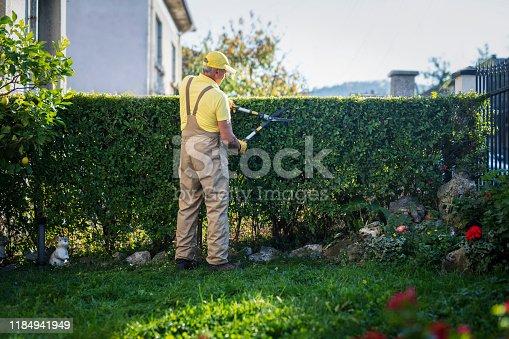 istock Gardener Trimming Hedge In Garden 1184941949