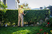 istock Gardener Trimming Hedge In Garden 1184941949
