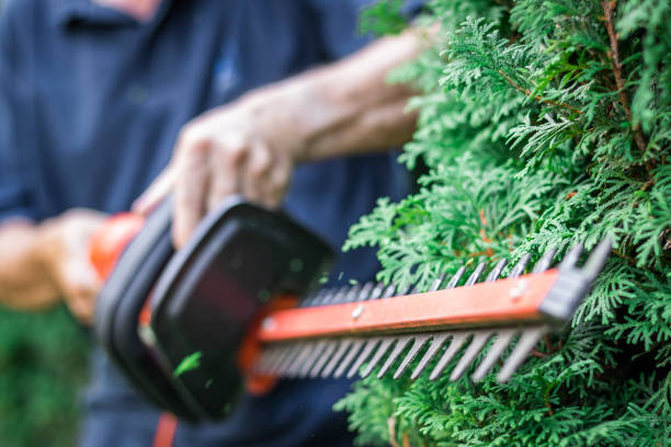 Gardener trimming overgrown green bush by electric hedge clippers. Selective focus, motion blur. stock photo