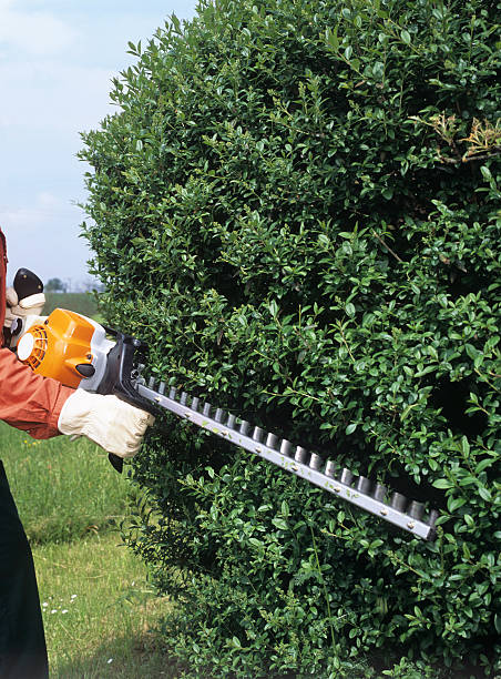 Gardener trimming the hedges Vertical outdoor shot, summer hedge clippers stock pictures, royalty-free photos & images