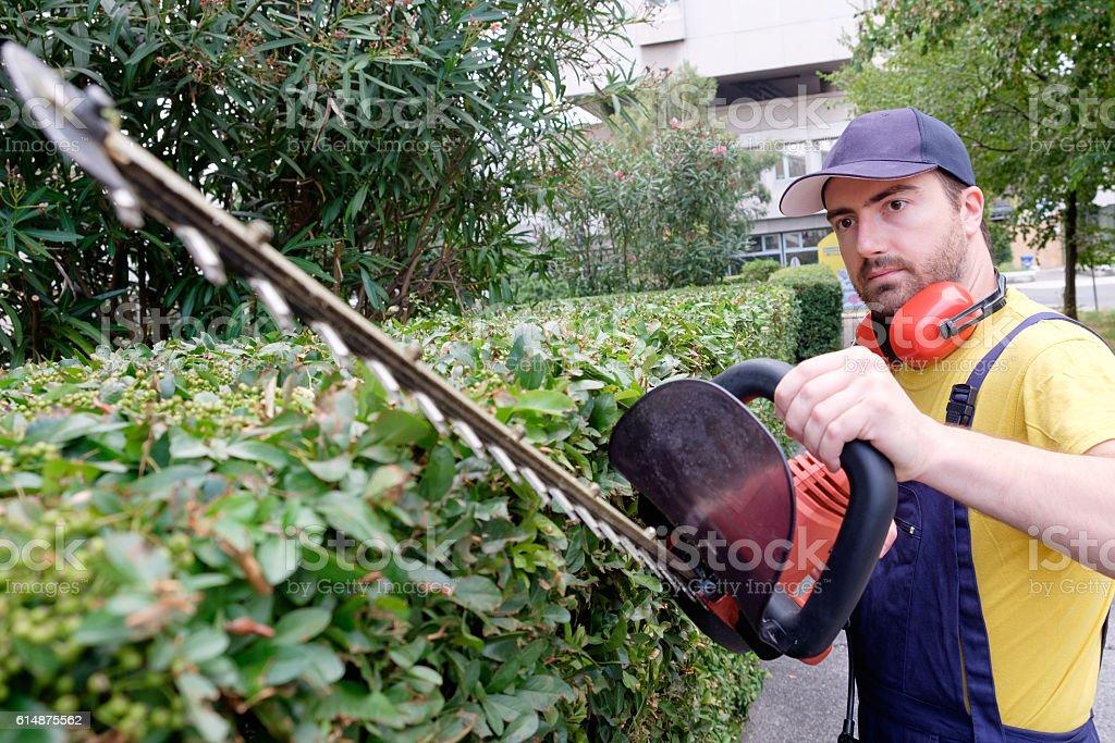 Gardener using an hedge clipper in the garden stock photo
