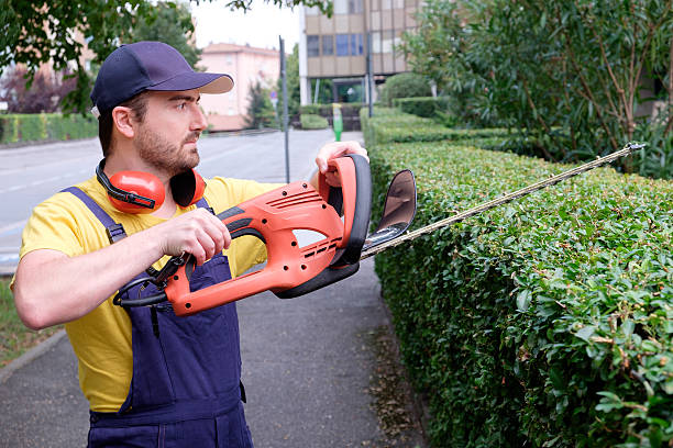 Gardener using an hedge clipper in the garden Gardener using an hedge clipper in the garden hedge clippers stock pictures, royalty-free photos & images