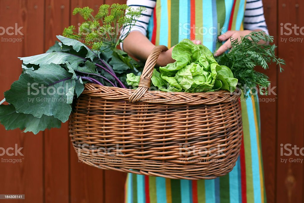 Gardener with a basket full of freshly picked vegetables royalty-free stock photo