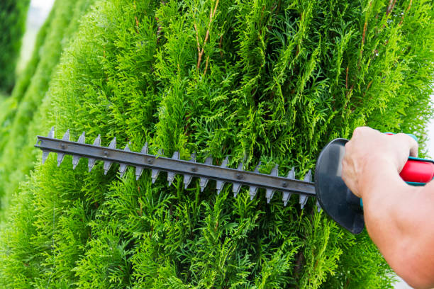 Gardener with a professional garden tools at work. planting of greenery Gardener with a professional garden tools at work. planting of greenery. hedge clippers stock pictures, royalty-free photos & images