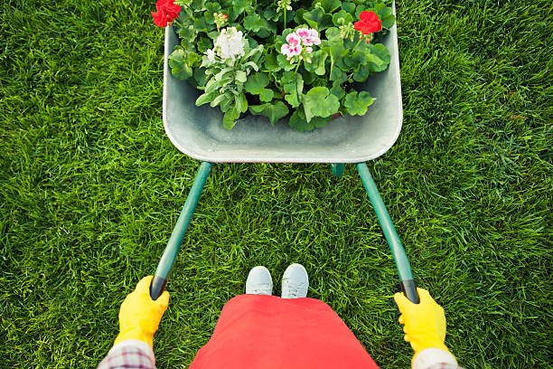 gardener with  flowers - kruiwagen stockfoto's en -beelden