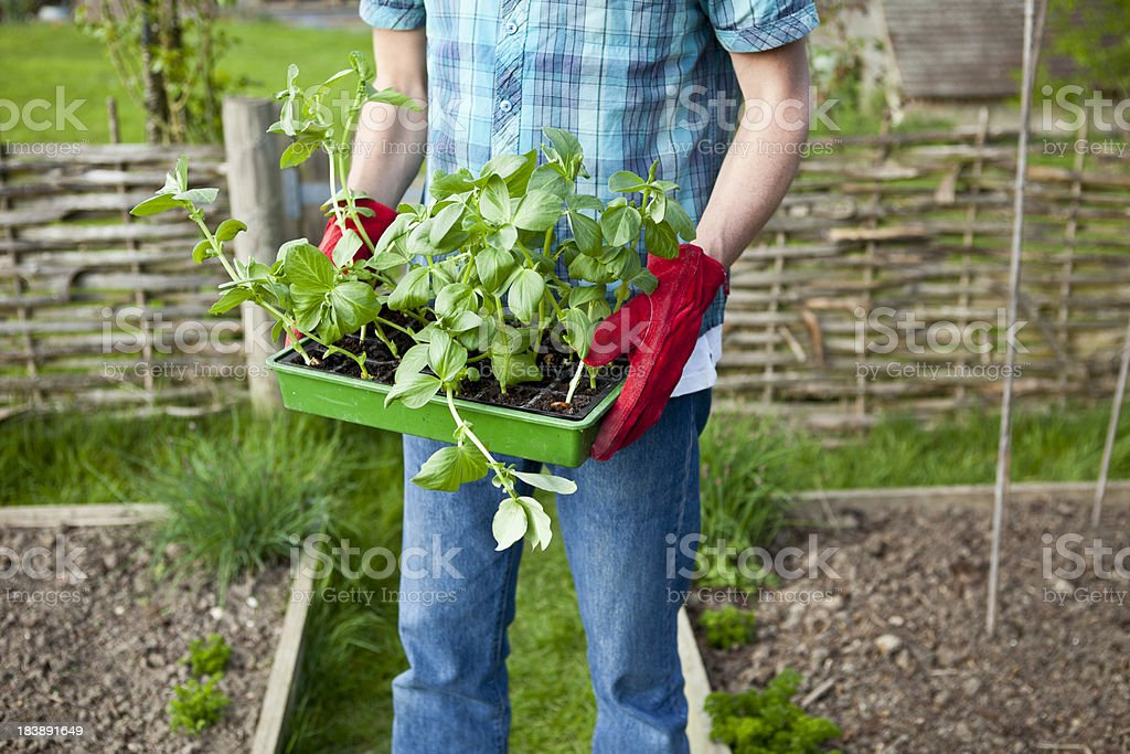 Gardener With Red Gloves stock photo