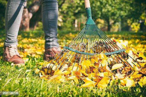 Autumnal work in garden.