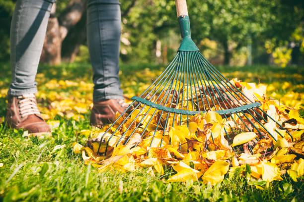 mujer de jardinero rastrillar las hojas de otoño en el jardín. mujer de pie con rastrillo. - fall leaves fotografías e imágenes de stock