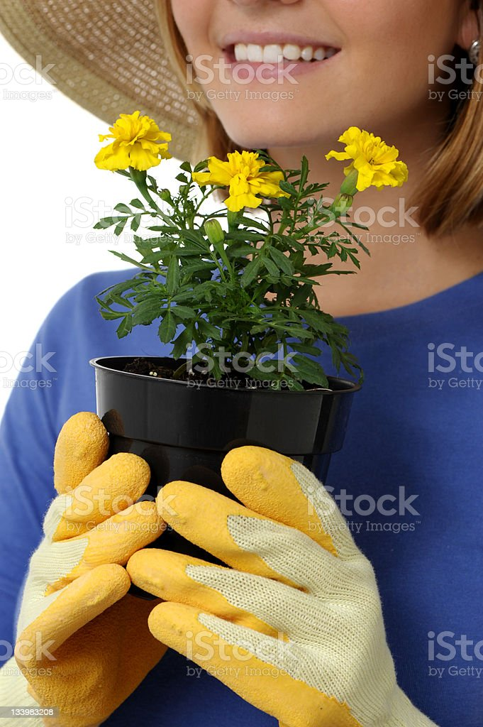 Gardener Woman with Seedling Flower Pot Isolated on White Background royalty-free stock photo