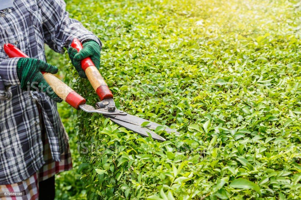 Gardener worker trimming plants, gardening service stock photo
