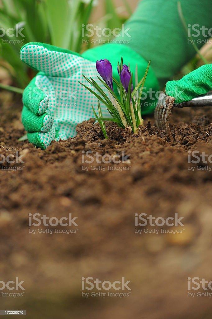 Gardener working in the garden royalty-free stock photo