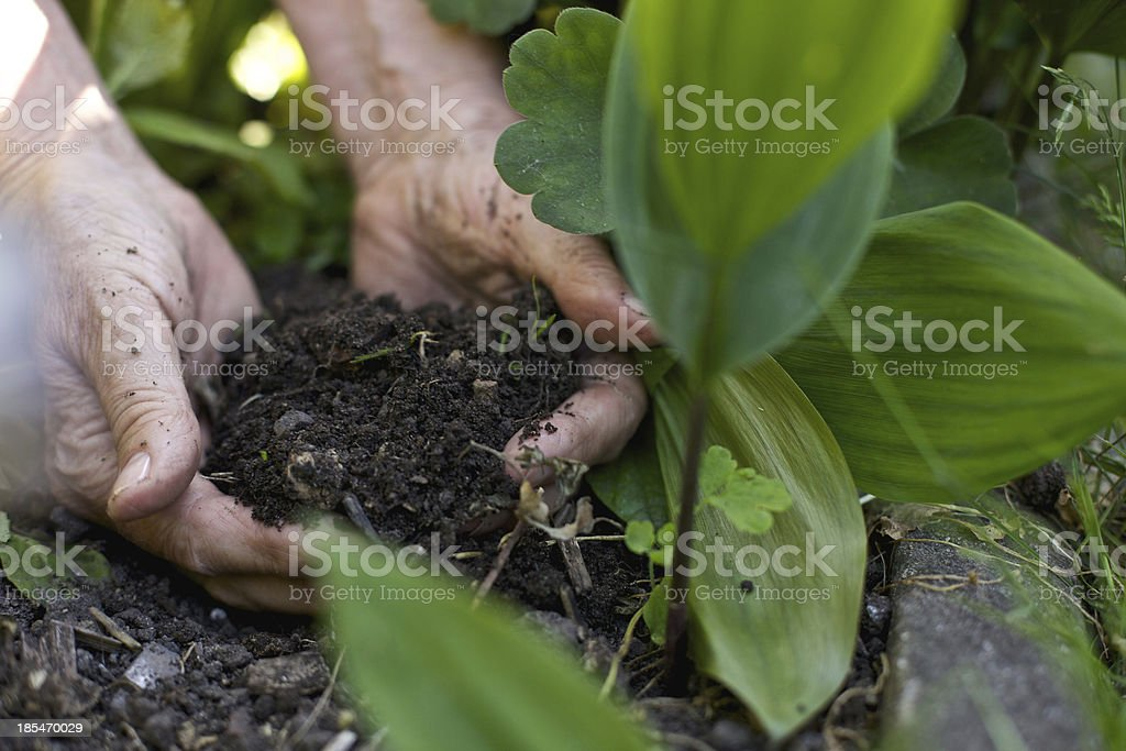 Gardener working in the garden royalty-free stock photo