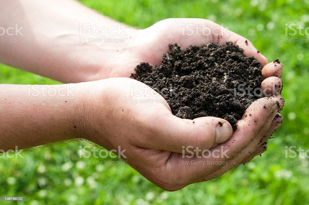 Gardener's hands holding dirt stock photo