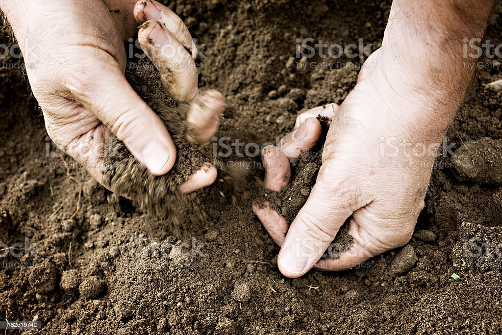 Gardeners Hands Sifting Soil In The Garden  Backgrounds Stock Photo