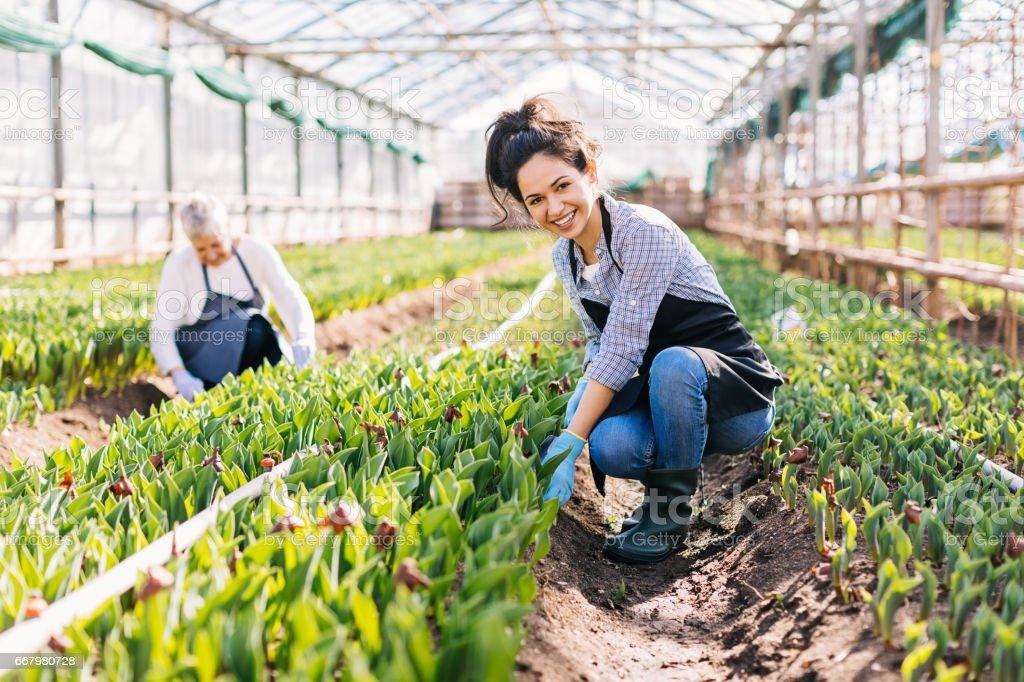 Tuinmannen en Hoveniers in de lente foto