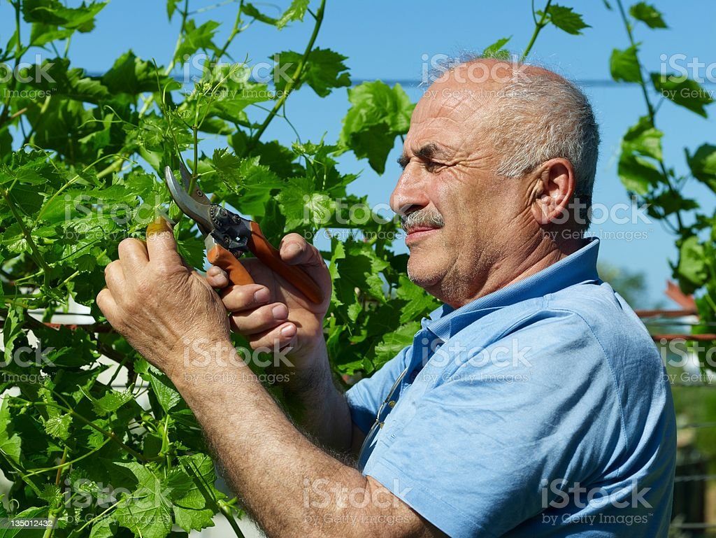 Gardeners royalty-free stock photo