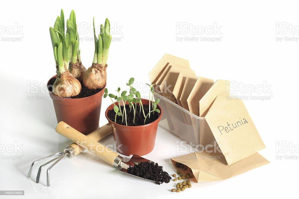 Gardener's spring stock photo