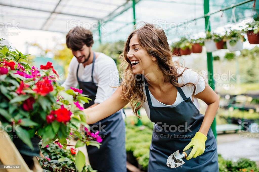 Gardeners working in a greenhouse stock photo