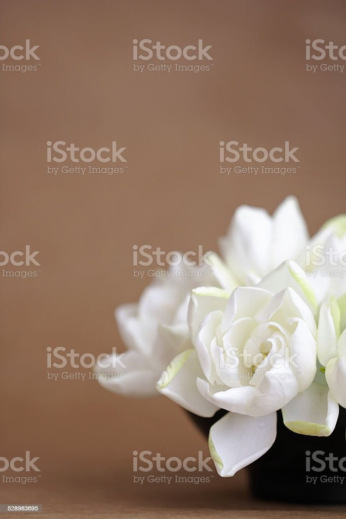 Gardenias Flowers Bouquet With Brown Background Stock Photo & More ...