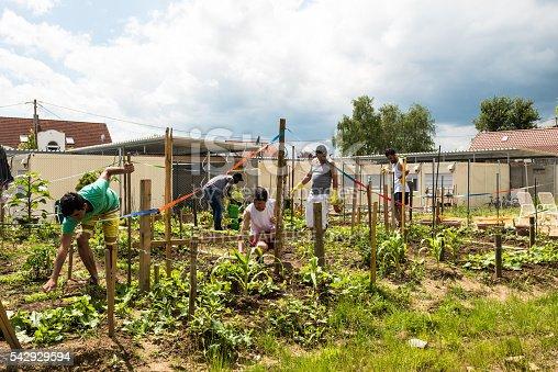 istock Gardening activities in a German refugee camp 542929594