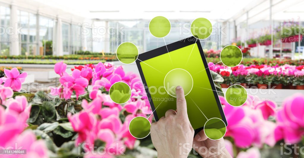 Gardening And Flowers Ecommerce Concept Online Shopping On Digital Tablet Hand Pointing And Touch Screen With Green Empty Icons On Spring Flower Plants In Greenhouse Background Stock Photo Download Image Now