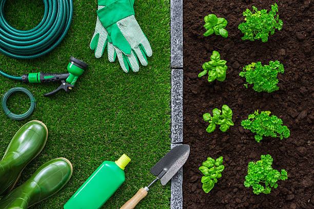 Gardening and food production - foto de acervo