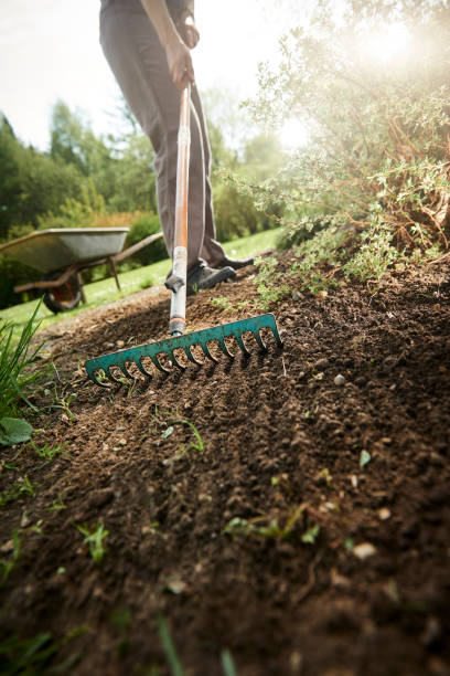 Gardening and raking in the garden in the spring stock photo