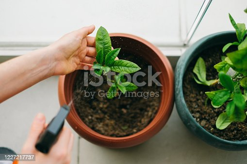 single woman gardening at home bolconey in urban