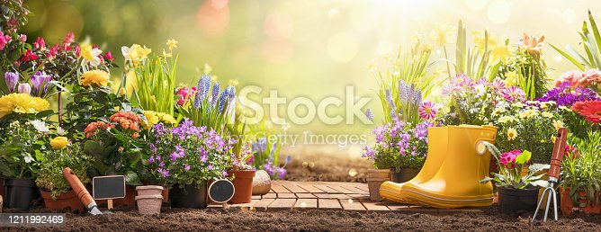 istock Gardening Concept. Garden Flowers and Plants on a Sunny Background 1211992469