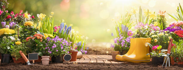 Gardening Concept. Garden Flowers and Plants on a Sunny Background Garden Flowers, Plants and Tools on a Sunny Background. Spring Gardening Works Concept springtime stock pictures, royalty-free photos & images