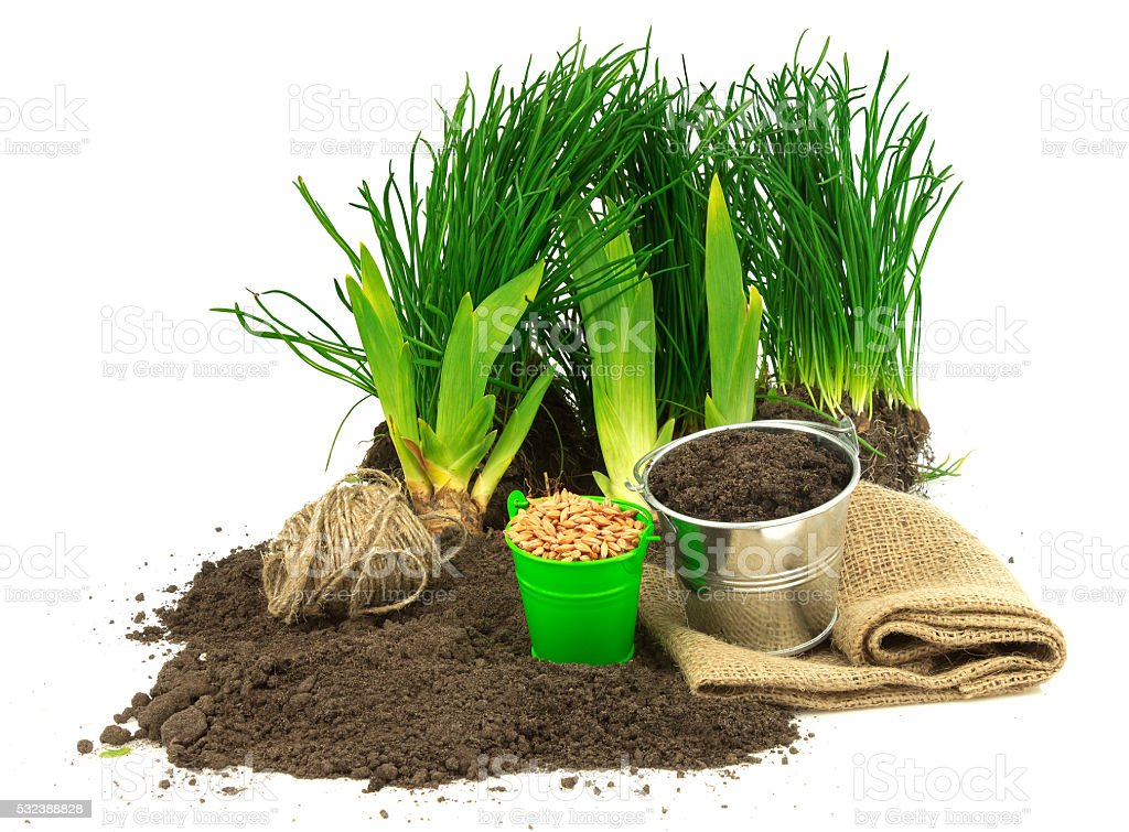 Gardening concept with grass, ground, seeds, metal bucket, sack, stock photo