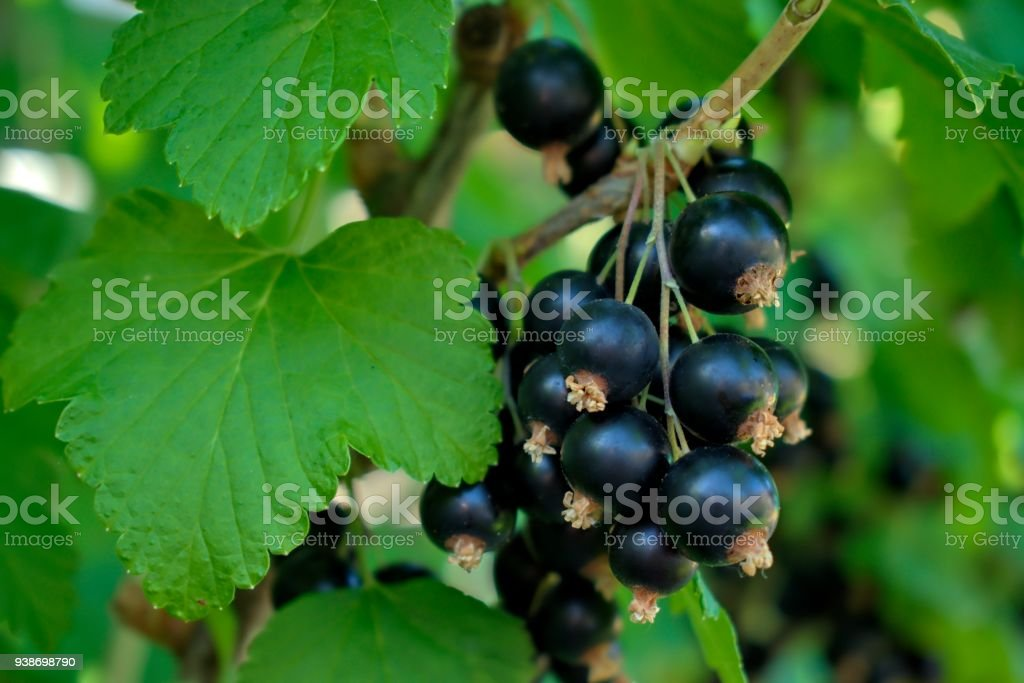 Gardening, cultivation, agriculture and care of vegetables and fruit concept stock photo