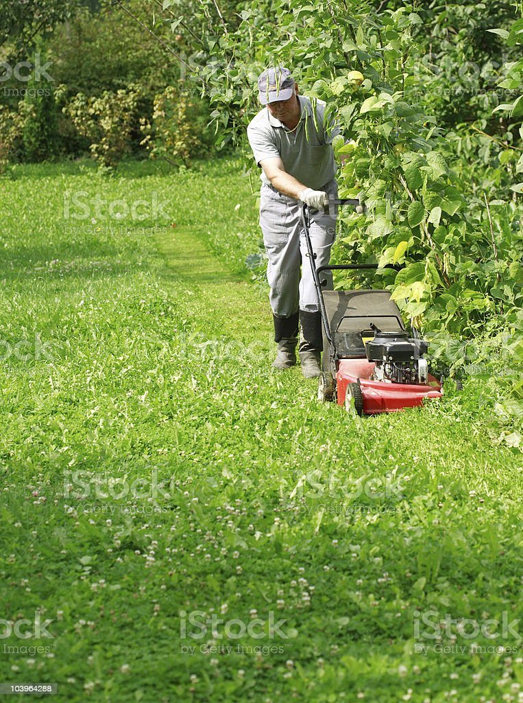 Gardening - cutting the grass stock photo