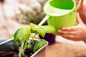 gardening detail, a green watering can is putting water to the newly planted plants