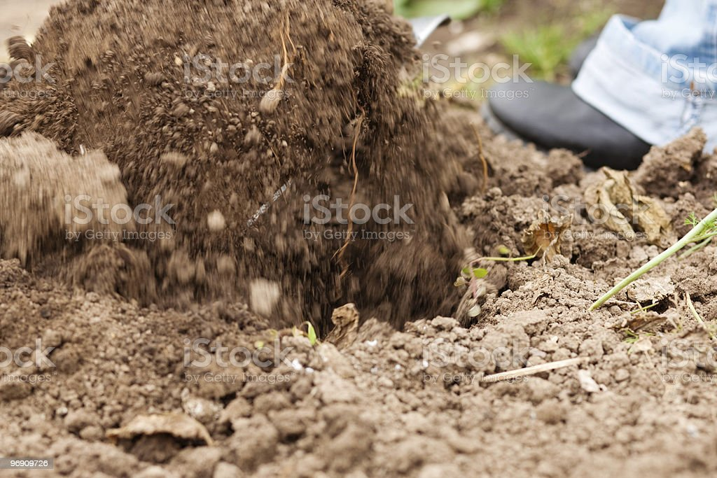 Gardening - digging over the soil royalty-free stock photo