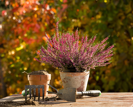 Gardening equipment and plant on table