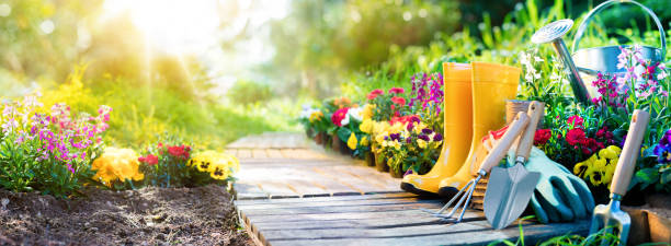gardening - equipment flowerbed in sunny garden - flowers stock photos and pictures