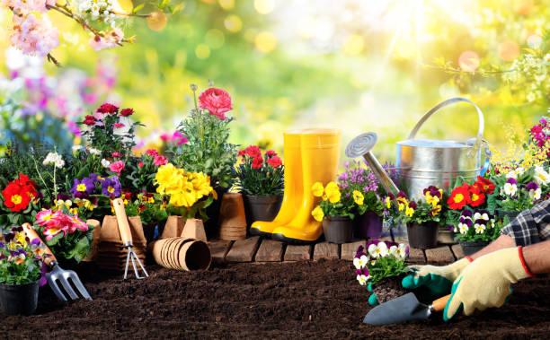 tuinieren-materiaal voor tuinman en bloempot in zonnige tuin - siertuin stockfoto's en -beelden