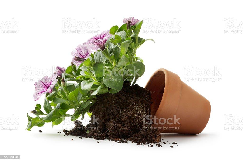 Garten:  Blume in Plant Kaffeekanne defekt – Foto