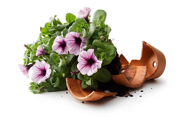Gardening flower in plant pot broken picture id474229718?b=1&k=6&m=474229718&s=612x612&w=0&h=zddhzmb916j 24e9ukyallxhfnrfafspjpoluvmxg3o=