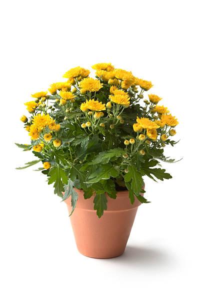 gardening: flowers - bloempot stockfoto's en -beelden