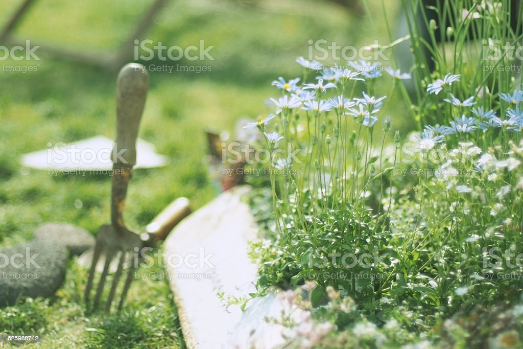 Gardening  Fork Standing in Garden stock photo