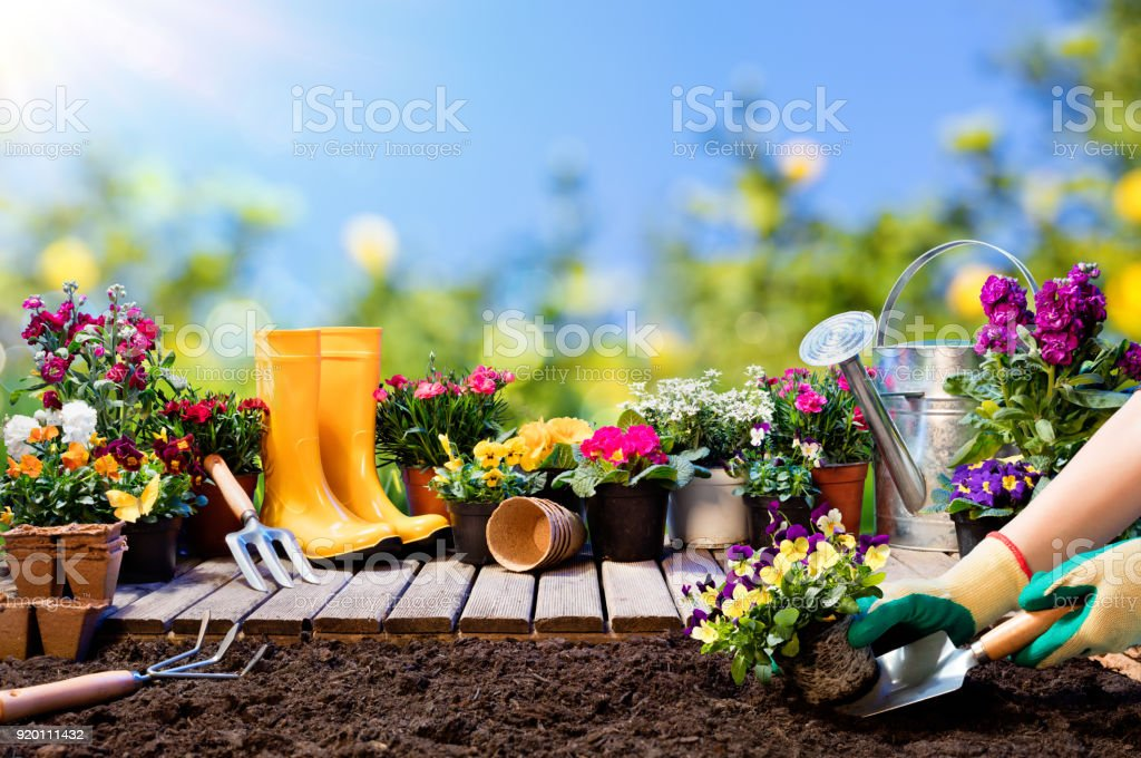Gardening - Gardener Planting Pansy With With Flowerpots And Tools stock photo