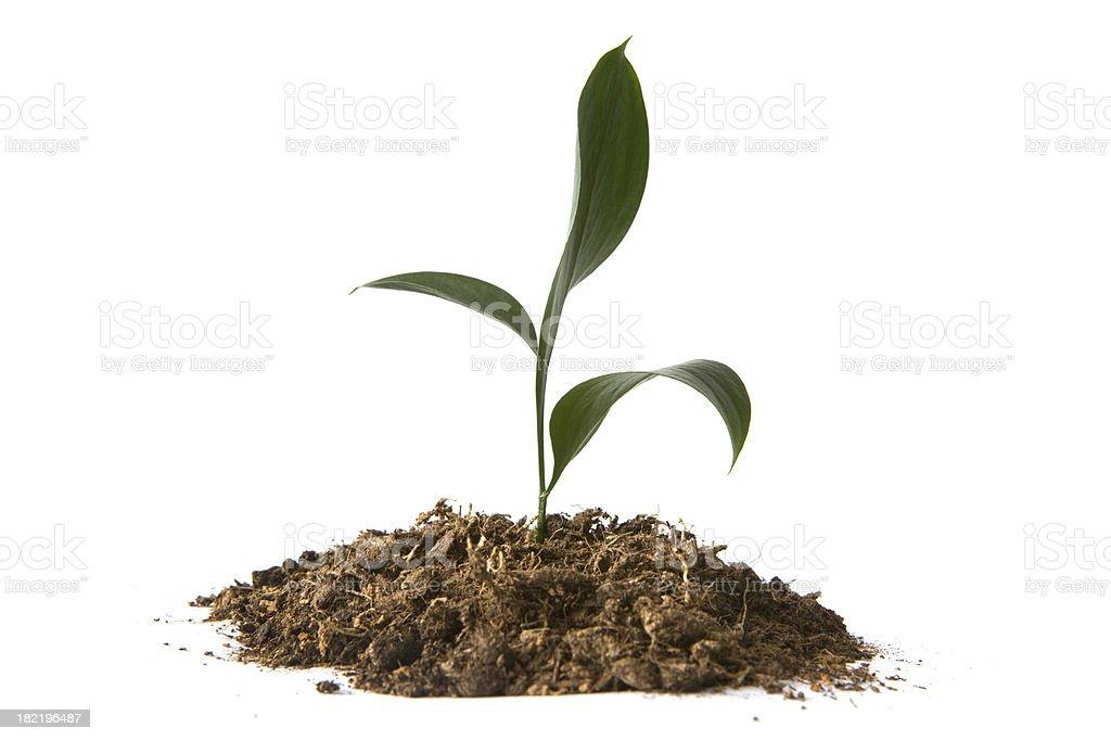 Gardening: Green Plant royalty-free stock photo