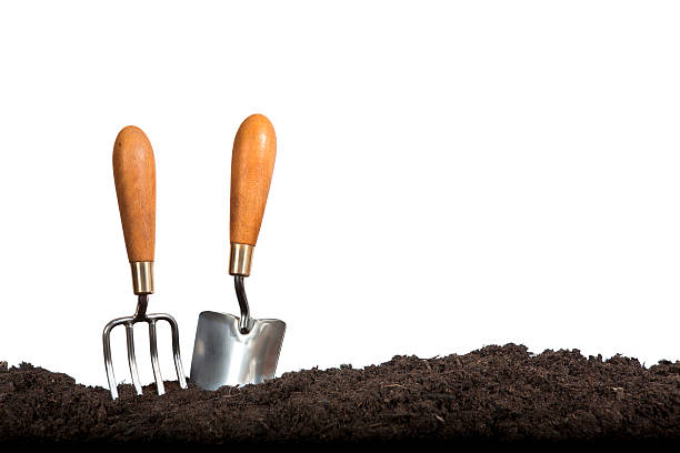 Gardening Hand Tools on White Background Gardeners' hand fork and trowel set in compost on white background. gardening equipment stock pictures, royalty-free photos & images